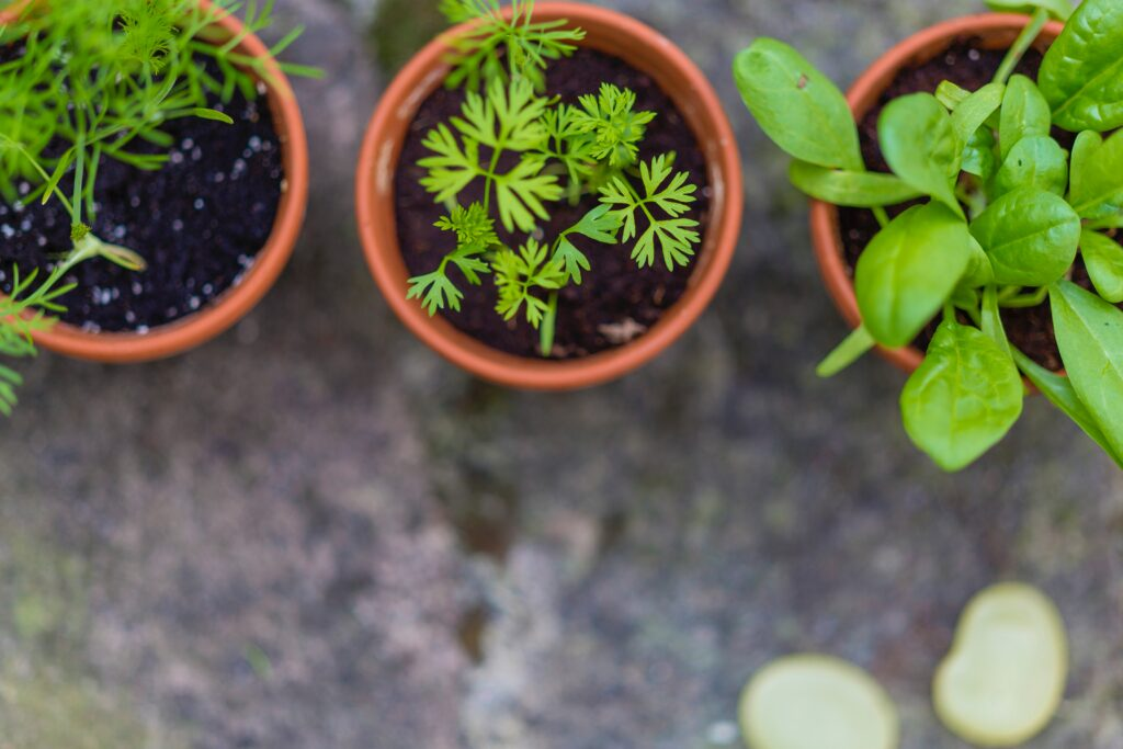the best plants for your indoor urban garden